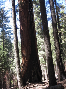 View Of Hart Tree