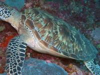 Sipadan Diving Site