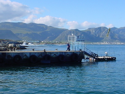 Hermanus  New  Harbour