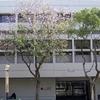 Chinese University Art Museum