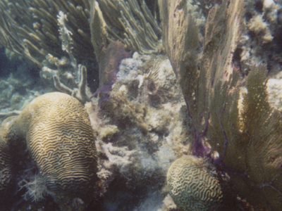 Corals Lining The Hol Chan Cut