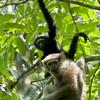 Hoollongapar Gibbon Sanctuary