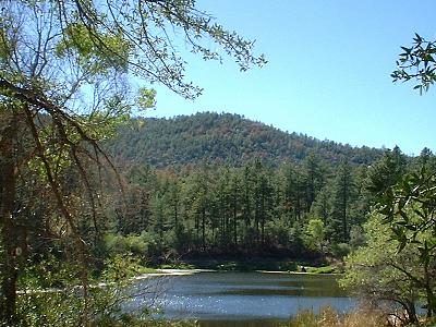 Horsethief Lake Near Crown King