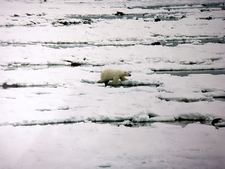Ice Begins To Form In Early November At Hudson Bay