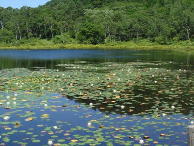 Ichinuma Pond - Shiga Kogen, 2008