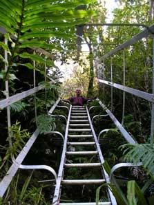Ihaia Track To Waiaua Gorge Hut - North Island - New Zealand