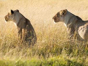 3 Days Etosha Wildlife Safari (Camping) Photos