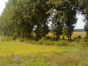 Giurgiu County