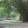 Cubbon Park Flora & Fauna - Bangalore