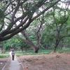 Walkway - Cubbon Park - Bangalore