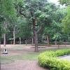 Cubbon Park Resting Visitors - Bangalore