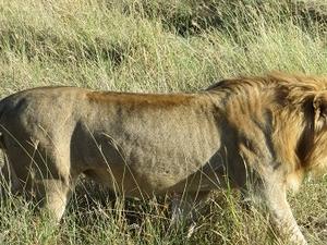 Tanzania Classic Safari 8 Days Fotos