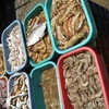 Dry Fish At Russel Market