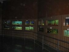 Bangalore Aquarium Gallery