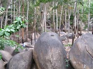 Bugle Roca