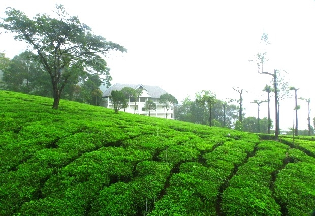 The Complete Kerala Luxury Package Photos