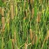 Stillwater National Wildlife Refuge Fields