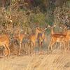 Katavi Safari Package