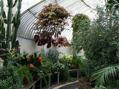 Inside Palm House