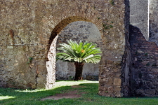 Interior With Palmtree