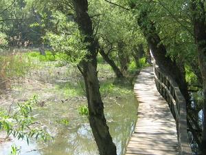 Inundación Área de Vác