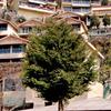 Avalon Resorts