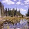Isa Lake - Yellowstone - USA