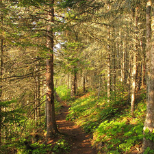 Tobin Harbor Trail