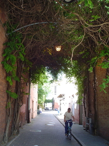 Ivy Haning Over Salem Alley