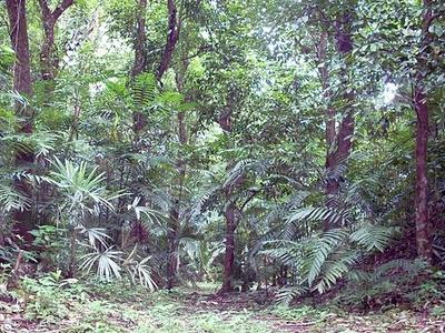 Ixkun Ballcourt - Petén Department - Guatemala
