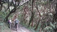 Inca Trail Cloud Forest