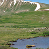 Alpine Tundra And Pool South