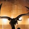 Irish Elk In Museonder