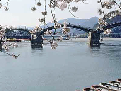 Kintai Bridge At Cherry Blossom Time