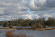 Jackson Bottom WP Landscape - OR