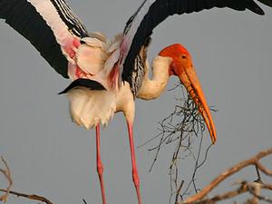 Jaimangala Garh Island