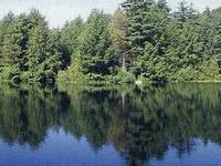 James L. Goodwin Forestal del Estado