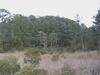 Jamestown Swampland
