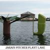 Jarain Pitcher Plant Lake Jaintia Hills District