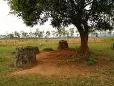 Jars Under Tree At Plain Of Jars