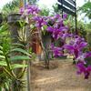 Jawaharlal Nehru Tropical Botanic Garden And Research Institute - Thiruvananthapuram