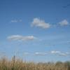JBWP Birds - Hillsboro OR