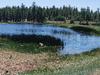 J D Dam Lake