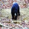 Jessore-Sloth-Bear-Sanctuaary-Ambaji