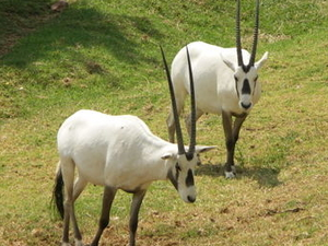 Zoológico de Joanesburgo