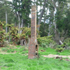 Johnson's To Bettjeman's Track - North Island - New Zealand