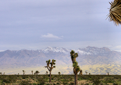 Joshua Trees & Virgin Mountains