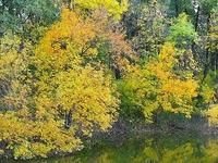 Jásztelek-Pusztamizse Reserva Natural