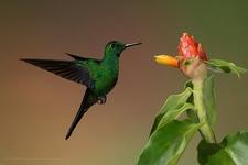 Juan Castro Blanco National Park Hummingbird