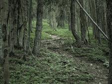 Jug Trail 61 - Tonto National Forest - Arizona - USA